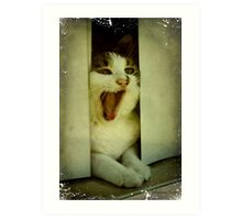 Laughing Cat in the Window Art Print
