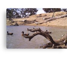 Ducks on Dam Canvas Print