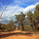 The Pilliga Scrub by myraj