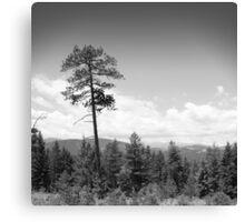 Evergreen, Colorado Canvas Print