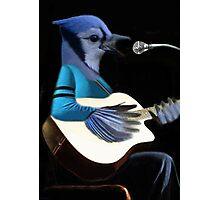 **¨*•MY BLUE JAY PLAYING GUITAR AND SINGING ME A SONG PICTURE /CARD>> ALSO ANIMATED HIM **¨*• Photographic Print