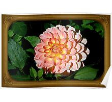 A Dahlia the Color of Peaches and Cream Poster