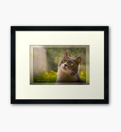 Oh Look © Vicki Ferrari Photography  Framed Print