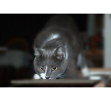 Curiosity © Photographic Print