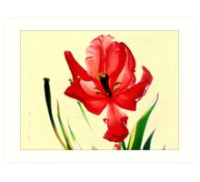 December's Red Tulip Art Print
