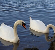 swanning off by Lesleymc77