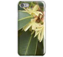 Star Aise (Illicium verum) iPhone Case/Skin