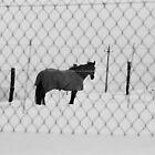CHE COSA VUOI ? NON HAI MAI VISTO UN CAVAllO CON IL CAPPOTTO !  what wouldYOU LIKE? YOU'VE NEVER SEEN A  HORSE WITH THE COAT  ! VETRINa RB explore aprile 2013            ! by Guendalyn