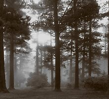 Morning Mist by Susan Segal