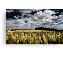 Angry Wheat, Co Kildare, Ireland. Canvas Print