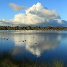 Bibra Lake - Western Australia by Karen Stackpole