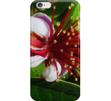 Feijoa Flower iPhone Case/Skin