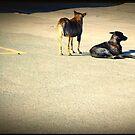 Street dogs by iamelmana