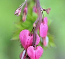 Pink Hearts by Kasia Nowak