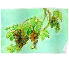 Green grapes Poster