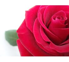 red rose. Photographic Print