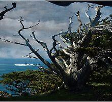 Solitary Cypress by Wayne King