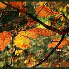 Autumn Foliage - Oak 2 by Sabine Spiesser