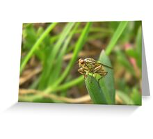 Fly on a leaf Greeting Card