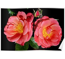 MELUSINA - a Luxembourg rose (Tantrau roses) Poster
