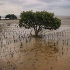 Marvellous mangrove by athex