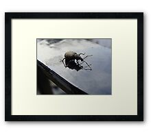 Bug off Framed Print