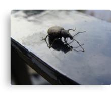Bug off Canvas Print