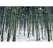 Blue Winter Forest Photographic Print