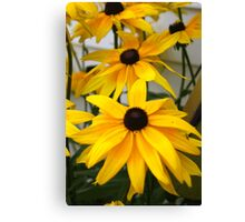 Black Eyed Susan Flower  Canvas Print