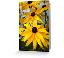 Black Eyed Susan Flower  Greeting Card