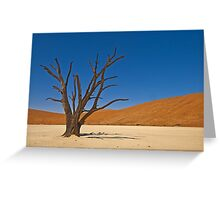 Camel thorn tree (Acacia erioloba) Greeting Card