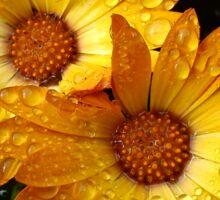 Golden droplets Sticker