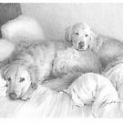 two dogs in bed drawing by Mike Theuer