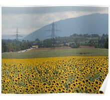 Sunflower fields Poster