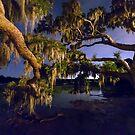 Night Oak on Johns Island by Patrick Brickman