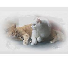 Perfect  friends Photographic Print