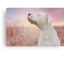DOGO SUNSET Canvas Print