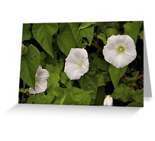 Sea Bindweed, Muckross Head, Donegal Greeting Card