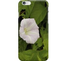 Sea Bindweed, Muckross Head, Donegal iPhone Case/Skin