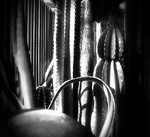 Cactus Garden Dark by Christopher Johnson