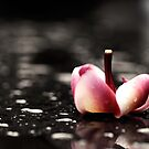 Kiss in the Rain by the-novice