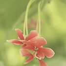 Pensile Little Blossoms by the-novice