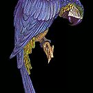 Blue Parrot Wall Art by Walter Colvin