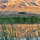 Mountain Reflections by marilyn diaz