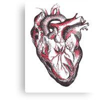 Anatomic Drawing of a Human Heart Canvas Print