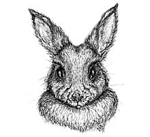 Bunny (black ink/felt pen) Photographic Print