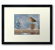 Robin on a Winter Day Framed Print