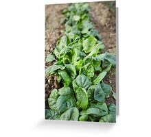 Spinach in the garden Greeting Card