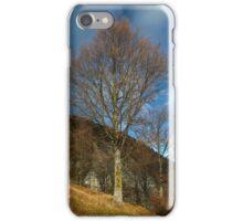 Beech tree on mountain iPhone Case/Skin