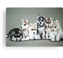 Husky Puppies Canvas Print